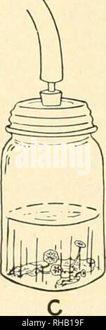 . Botanische microtechnique. Botanik - Anatomie, Botanik-- Morphologie; Mikroskopie-- Technik; Mikroskope -- Technik; Botanik; Pflanzen-- Anatomie & Amp; Histologie; Mikroskopie. Abb. 3.1 - sauggebläse Setup für das Pumpen von Proben in der Tötung fluid: A, Flasche mit Finger Ventil oder Glas Uhr stoppen; B, Muster Flasche oder große leere Flasche in Avhich Muster Flasche ist; C, pint Glas als Behälter für große Exemplare verwendet. Bitte beachten Sie, dass diese Bilder aus gescannten Seite Bilder, die digital für die Lesbarkeit verbessert haben mögen - Färbung und Aussehen dieser Abbildungen extrahiert werden Stockfoto