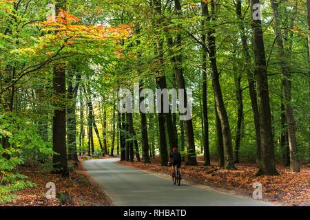 Ein einsamer Radfahrer reiten entlang der wunderschönen Waldweg. Aktivitäten wie diese sind allgemein unter Niederländer. - Stockfoto
