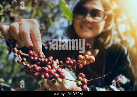 Asiatische Frau lächelndes Gesicht glück Emotion in der Nähe der Rohstoff Kaffee Samen auf Ast - Stockfoto