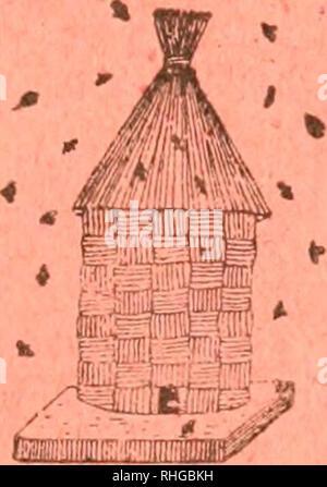 """. - Boletà n de la Sociedad entomológica de España. Entomologie; Insekten. . J> e.  J Tomo II. S^DlCIEMBRK DE IQIQ NÃ. M. Ã-) BOLETÃN DI-; I.A Sociedad Entomológica de España Fiiiidada el B de Enero de IBIB. Â^nm f ^--r Laliori'Ã-l Drditie Seooión SUMARIO oficial. Sesiones celebradas El 4 de Noviembre y 2 de November de 1919 Kommunikation. âCatálogo sisteniáTico - geográFico de los Coleóp - teros observados penà nsula de la - ibérica, Pirineos propiamente dichos y Baleares (continuación), Rdo. D. José María-a de la Fuente y Mo-rales^/'/yà - """"O. - Sobre Dryops (Kol.; España Oles, D. Ric"""