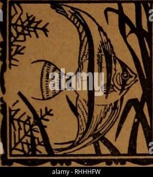 . Blätter für Aquarien- und Terrarien-Kunde. . // For^ iquexriort - unö Decemtgt mit ffTfitUP XXXXÖ QOXX&. Bitte beachten Sie, dass diese Bilder sind von der gescannten Seite Bilder, die digital für die Lesbarkeit verbessert haben mögen - Färbung und Aussehen dieser Abbildungen können nicht perfekt dem Original ähneln. extrahiert. Stuttgart - Stockfoto