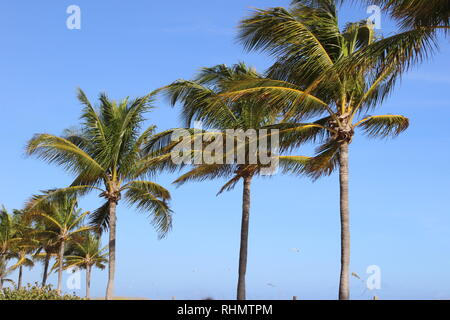 Alle beach themed in Florida Fort Lauderdale Beach. - Stockfoto