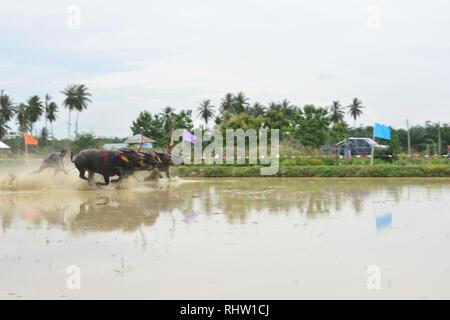 CHONBURI, Thailand - Juni 18, 2017: Status der traditionellen Büffel racing in Chonburi, Thailand. Die Veranstaltung wird in der Regel vor der Reisanbau gehalten - Stockfoto