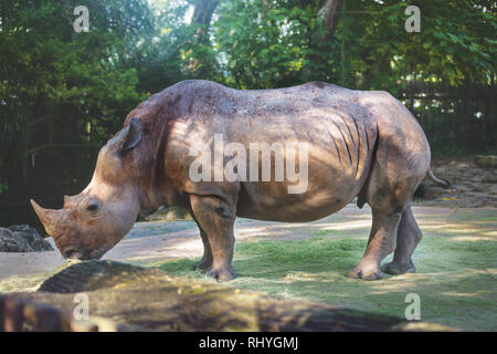 Wildes Tier in der Natur - Stockfoto