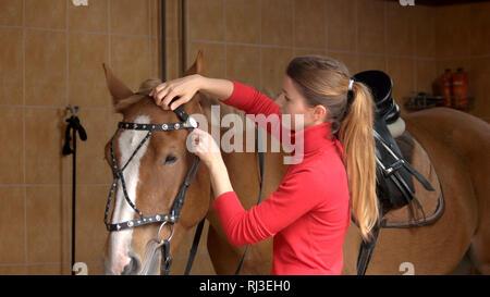 Pferd Reiter Vorbereitung Zaum an stabil. - Stockfoto