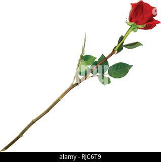 Vector Illustration von Photo-realistisch, sehr detaillierte Blume der Roten Rose isoliert auf weißem Hintergrund. Schöne Bud der Rote Rose auf langem Stiel. Clip - Stockfoto