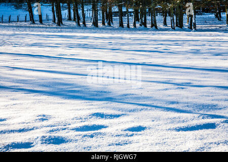 Ein Büschel des bloßen Winter Bäume auf schneebedeckte Felder in Wiltshire. - Stockfoto