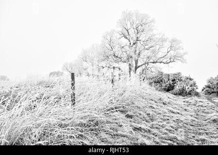Frost bedeckt Stacheldrahtzaun - Stockfoto