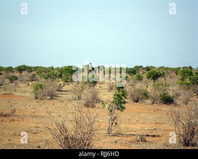 Einsame Giraffe - Stockfoto