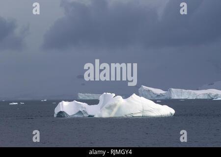 Buckelwal Megaptera novaeangliae zwei Tiere schwimmen im Südlichen Ozean in der Nähe der Eisberge in der Antarktis - Stockfoto