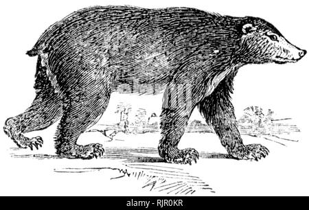 """Häufig: Holz graviert Illustration, von der """"Schatzkammer der Natur"""" von Samuel Maunder, veröffentlicht 1848 - Stockfoto"""