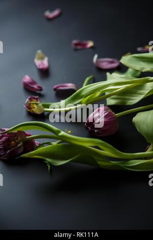 Blumenstrauß aus Tulpen Welken auf einem schwarzen depressiven Hintergrund. Gefallenen Blütenblätter der Tulpen auf einem dunklen Hintergrund. Makroaufnahme. Depressive alte Blumenstrauß