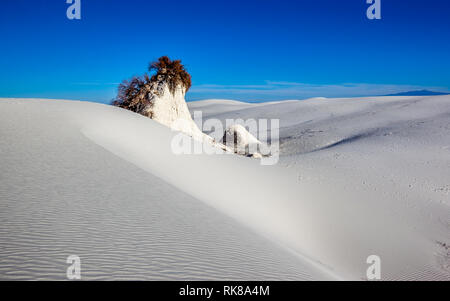 Skunkbush Sumac (Rhus trilobata) auf der Sanddüne im White Sands National Monument, New Mexico, USA. - Stockfoto