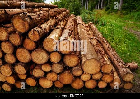 Holz Rundholz Schnittholz im Harz Deutschland gestapelt. - Stockfoto