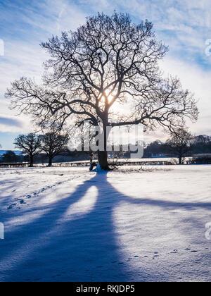 Eine hinterleuchtete Schuß eines silhouetted Baum in eine verschneite Landschaft. - Stockfoto