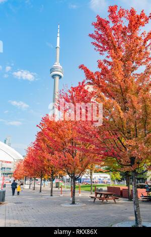 Sie suchen den CN Tower mit schönen roten Ahornblätter in Toronto, Kanada - Stockfoto