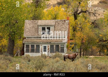 Peaceful Valley Ranch mit Wild Horse, Theodore Roosevelt National Park-South Einheit, North Dakota. - Stockfoto