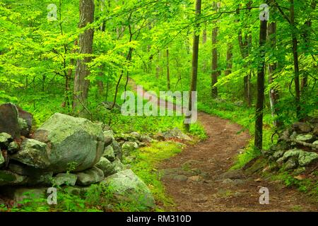 Laurel Trail, Teufel den Bewahren, Connecticut. - Stockfoto