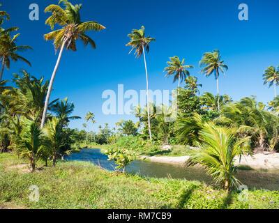 Schöne und einsame Lagune in einem Paradies auf Puerto Rico, USA - Stockfoto