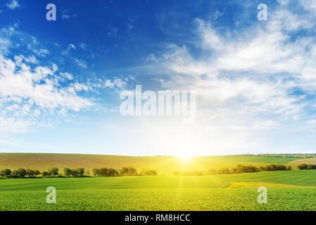 Morgenröte über Maisfeld. Platz kopieren - Stockfoto