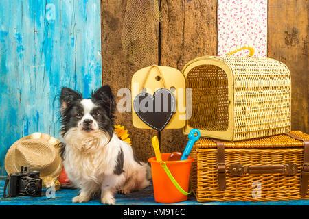 Lustig Hund mit Sommerurlaub Gepäck und Carrier Reisen bereit, an den Strand zu gehen - Stockfoto