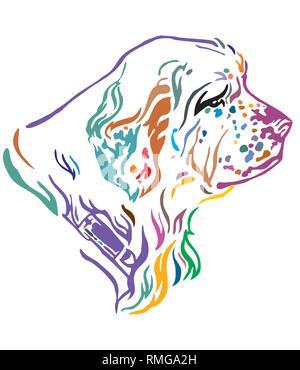 Bunt dekorativ Umrisse Portrait von Dog Clumber Spaniel Suchen im Profil, Vector Illustration in verschiedenen Farben auf weißem Hintergrund. - Stockfoto