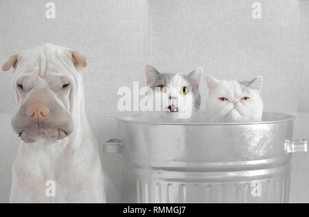 Zwei Katzen sitzen in einem Mülleimer neben einem Shar-pei Hund - Stockfoto