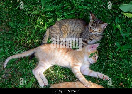 Ein grauer und ein Ginger tabby kitten Festlegung jedes neben anderen auf grünem Rasen - Stockfoto
