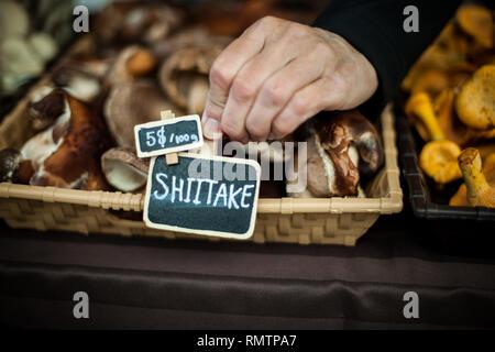 Hand ein Zeichen auf der shiitake Pilz Korb, am Bauernmarkt - Stockfoto