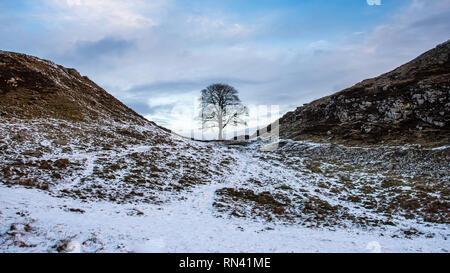 Winter Schnee liegt rund um den einsamen Baum von Sycamore Gap auf dem Hadrianswall in Northumberland. - Stockfoto