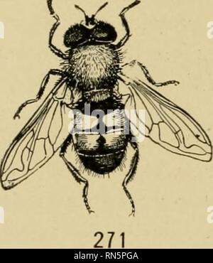 """. Tierische Gemeinschaften in gemäßigten Nordamerika, wie in der Region Chicago, Ill.; eine Studie in der Ökologie. Tierökologie, Zoologie. 270 Abb. 270.- eine große Räuber-fly {Dasyllis sp.); natürliche Größe (von Williston nach Kellogg). Abb. 271.- eine syrphus Fliegen{En der Talis ioiax); 15-fache natürliche Größe (von Williston nach Kellogg). cherry Ist das Lebensmittel, das Werk der """"Spanischen Fliege"""" (Epicuaia) und den Colorado Kartoffel- Käfer. Auf der Thistle Wir finden die Larven der cos-mopolitan und bemalt - dame Schmetterlinge (Pyrameis huntera Fab. und cardui Lin.). Eine der charakteristischen Bugs ist der 4-gefüttert - Stockfoto"""