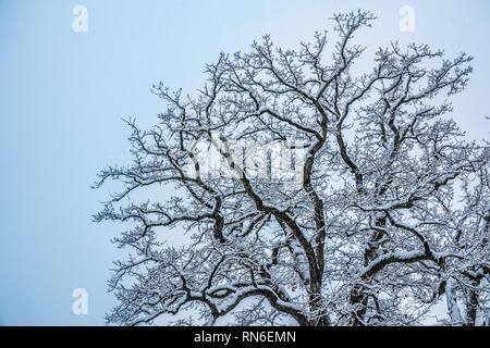 Schönen winter Szenen am Ufer des oberen Zürichsee (Obersee) in der Nähe von Hurden (Schwyz), Rapperswil-Jona (Sankt Gallen), Schweiz - Stockfoto