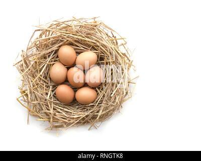 Blick von oben auf die braune Eier in ein Nest auf einem weißen Hintergrund, Bild mit kopieren. - Stockfoto
