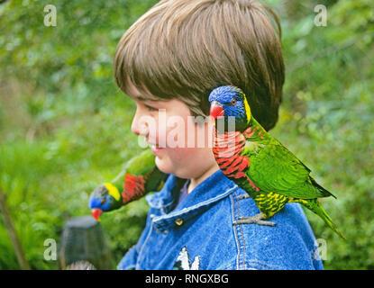 USA: Oregon: PORTLAND: Ein junger Mann wird von Rainbow Loris im vogelschutzgebiet an der Oregon Zoo begrüßt in Portland. - Stockfoto