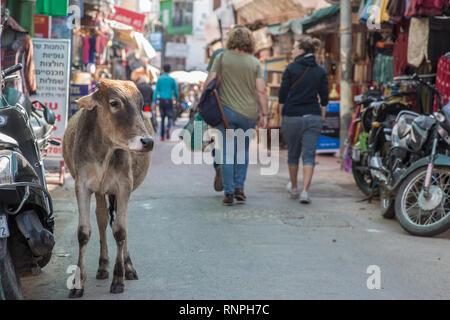 Eine Kuh auf einer belebten Straße an einem späten Nachmittag in Pushkar, Rajasthan. - Stockfoto