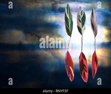 Wand, noch Leben: Surreal tanzende Blätter: Gebet, stromanthe Sanguinea 'triostar'. - Stockfoto