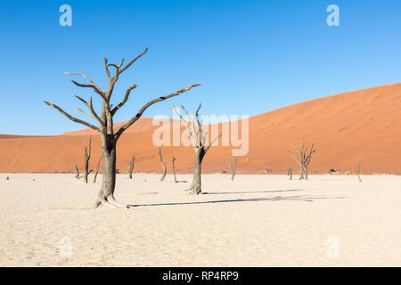 Das Sossusvlei in der Namib Naukluft National Park, Namibia und eine tote Akazie vor der Düne calles Big Daddy - Stockfoto