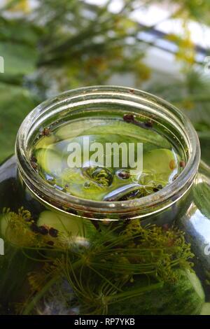 Eingelegte Gurken im Glas. Sommergericht - Stockfoto