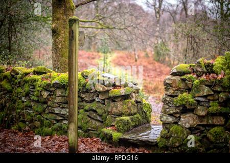 Ein nasser Tag auf Cartmel Fell im Lake District mit einem Fußweg Weg schlängelt sich durch den Wald in Richtung Kirche. - Stockfoto