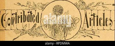 """. American bee Journal. Biene Kultur; Bienen. Etablierte-4734' der älteste BEL - Papier - AMER T'uhlisTieKj' V^e^li: ly, um ^l^ OO pro axuiiizn. Sample Cop>' gesendet am ^ppJicafion, 36. Jahr. CHICAGO, Ill., JAN. 2, 1896. Nr. 1. vs. Mixed Bee-Keepiug rTlcleit Spezialität. Durch die F.L. THOMPSON. """"Ich bin eine von denen, die noch Hoffnung zu sehen, eine Klasse von amateur Imker auf dem amerikanischen Kontinent, die Bienen für die Liebe der Sache halten, und nicht nur für das Geld, das sie aus ihm machen kann."""" - Bee-Master, auf Seite 409 des Bee Journal für das Jahr 1895. """"Essays darüber informiert, dass die Bienenzucht als Business b - Stockfoto"""