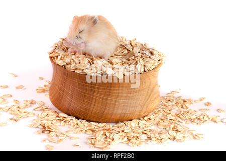 Haferflocken in eine hölzerne Schüssel mit einem Hamster auf weißem Hintergrund - Stockfoto