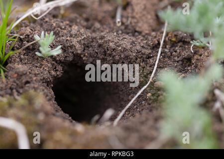 Tier graben oder U-Bahn auf einem Hügel - Stockfoto