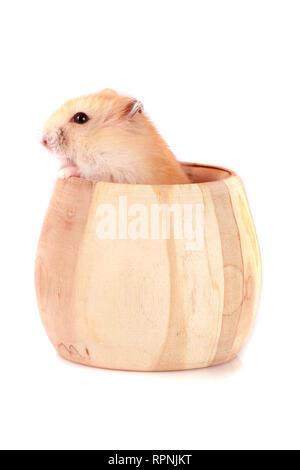 Kleine lustige Hamster in eine hölzerne Schüssel auf weißem Hintergrund - Stockfoto