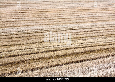 Abgeernteten Weizenfeld, Palouse, Washington - Stockfoto