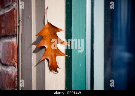 Blatt auf Fensterrahmen - Stockfoto