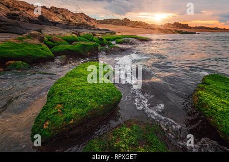 Sonnenuntergang auf dem Meer mit grünen Algen - Stockfoto