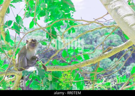 Monkey sitzen auf dem Baum lebt in einem natürlichen Wald mit Kopie Raum Text hinzufügen - Stockfoto