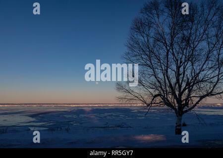 Rogers City, Michigan - ein einsamer Baum im Winter am Ufer des Lake Huron. - Stockfoto