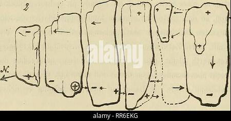 """. Abhandlungen der Senckenbergischen Naturforschenden Gesellschaft. Natural History. Abb. 1. Grundrifs eines zerklüfteten Magnetsteines v. Pranken-stein südlich vom Signal, ab Klüfte. Kopie / Ludwig und Seibert, 1863. EG/et. Abb. 2. (Skizze) Grundrifs eines^ Jfj^ Magnetsteinfelsens Eine der"""" •<^C^gleichen Stelle wie obiger Fels, 33 Schritte südsüdwestl. vom Signal, der Pfeil giebt immer sterben Richtung der Nord-Nadel eine, sterben Pole im Ring liegen etwas unter der Ober-fläche. Die punktirten Teile der Felsen liegen tiefer, Sindh Orig.-von Moos bedeckt und heben sich nicht scharf ab. Ganze Sterben - Stockfoto"""