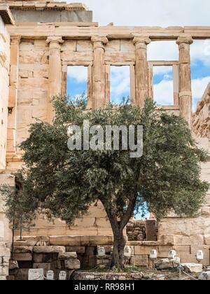 Athen, Griechenland - November 1, 2017: Athena olivenbaum an der alten Erechtheion Tempel, eine schöne Struktur Teil der Akropolis in Athen, Music - Stockfoto